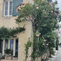 Le charme de cette maison ♡ . . #saintmartinderé #ilederé #maisondecharme #cottagestyle #holidays #familytime
