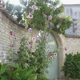 Se perdre dans les ruelles fleuries de l'île de Ré...je ne m'en lasse pas ♡ . . #ilederé #lacouarde #ruelle #familytime #holidays