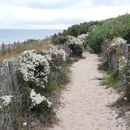 P r o m e n a d e 🌿 s a u v a g e . . #ilederé #lacouarde #promenade #nature #paysagesauvage #borddemer #holidays #familytime